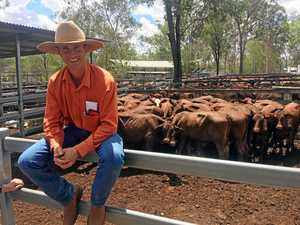 Cattle sale holding up well