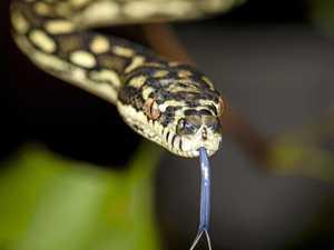Sharp eye for detail captures snakes beauty