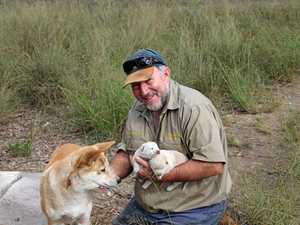 Don't kill them, let them stay here: Dingo Sanctuary owner