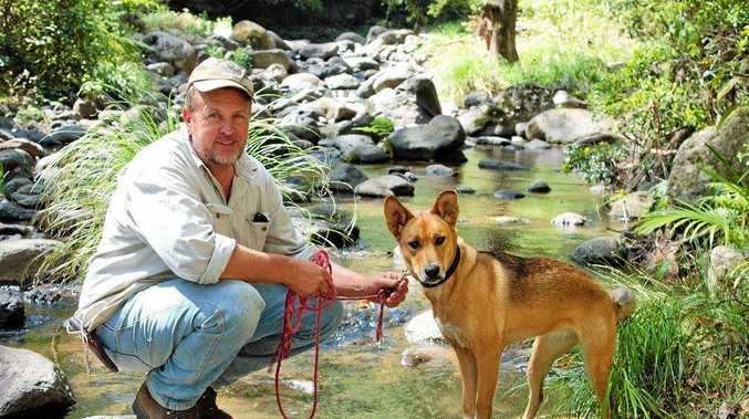 Bill Crisp of Tracs Wild Dog Management said he's highly concerned that someone will be attacked and seriously injured by feral dogs after a woman was injured by a pack in Dyrabba.