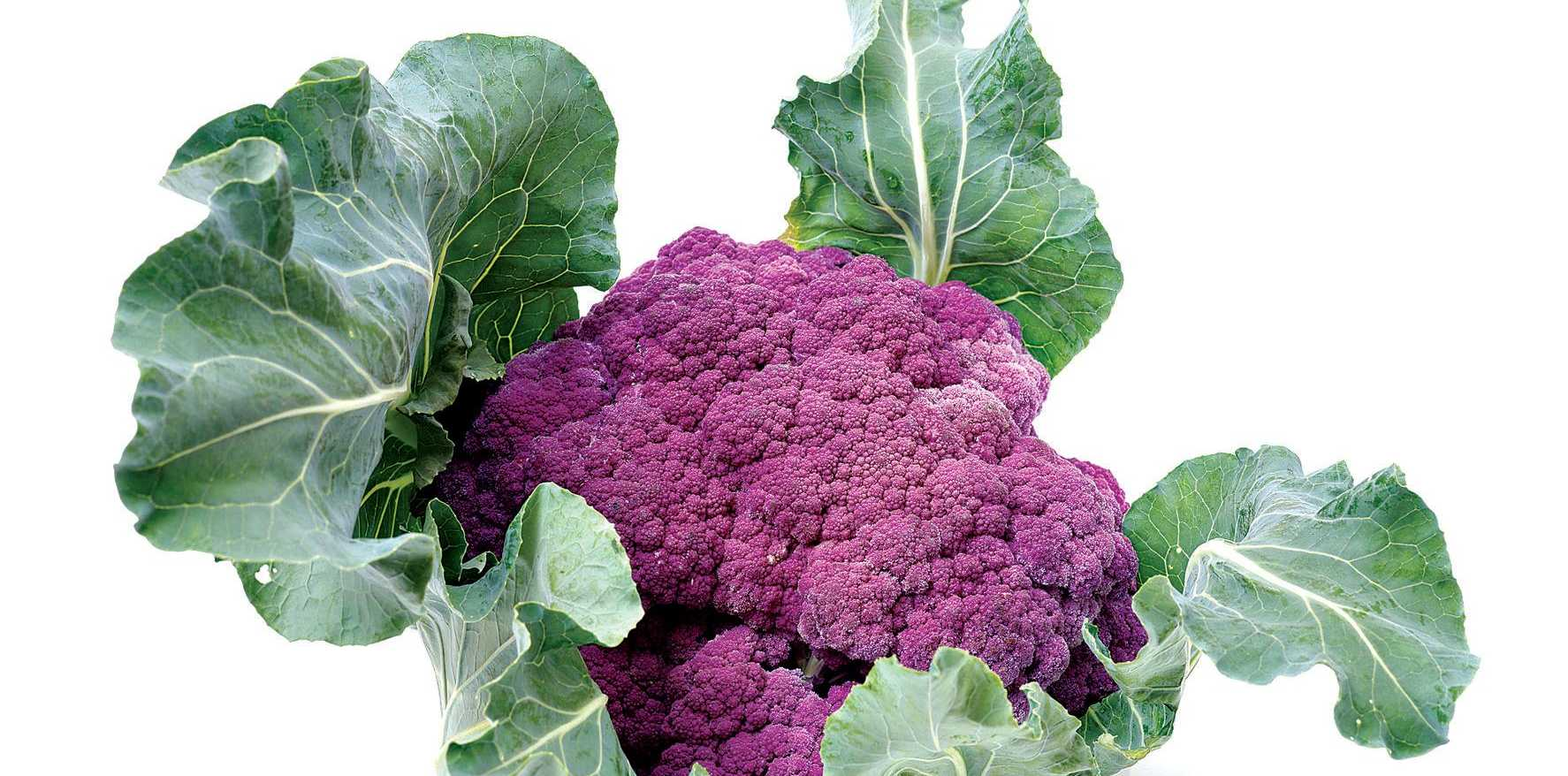 Get your garden in a purple patch with Violet Sicilian cauliflower.