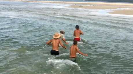 Four young lads rescued a dolphin when it became stranded on a  small sand island off Inskip Point on Saturday.