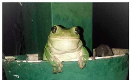 The frogs were kept happy in the rain on Thursday.