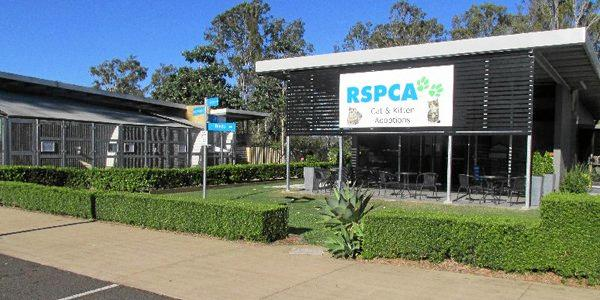 RSPCA Gympie has a number of pets available for adoption.