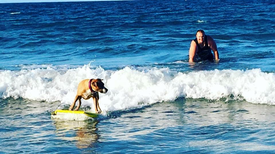 Josh Mortensen shared this photo of his staffy Lilly just hanging 10 on a boogie board.