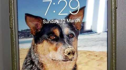 This phone was found in Lennox Head on Sunday.