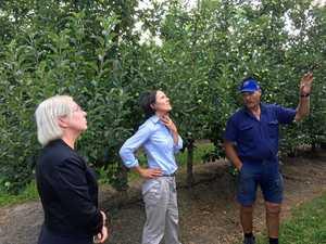 Heat plays havoc on Stanthorpe apple orchards