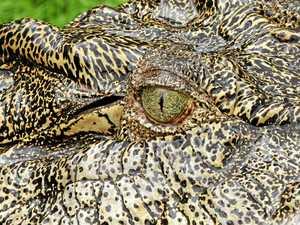 What changes for Rockhampton under new Qld croc plan?