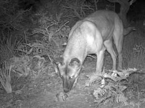 Community to tackle wild dog problem