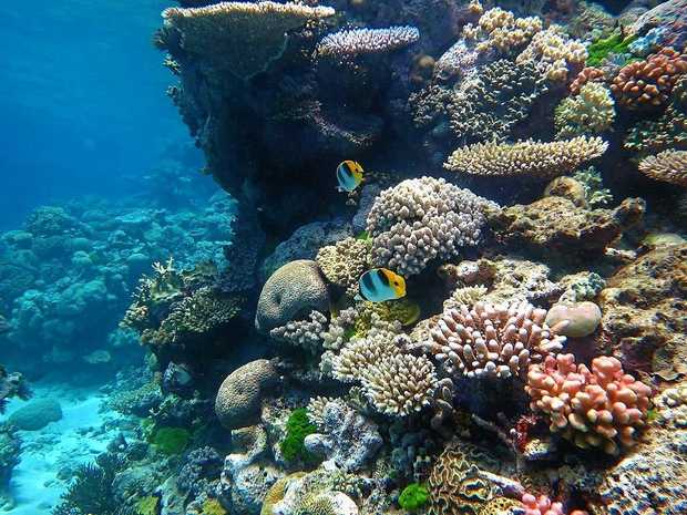 EYES GLUED: An Eye on the Reef forum will be held Thursday.
