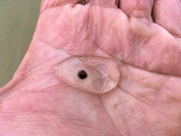 INVADERS: Millions of tiny salp were in the Bay last weekend.