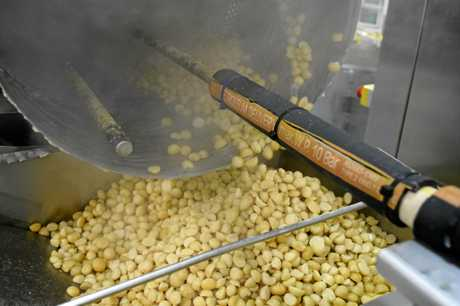 Macadamias being processed at the Pacific Gold Macadamia plant.