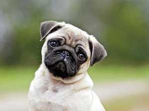 Avoid breeders, buy from an animal shelter