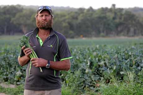 Chris Wren on his Stanthorpe brocollini farm.
