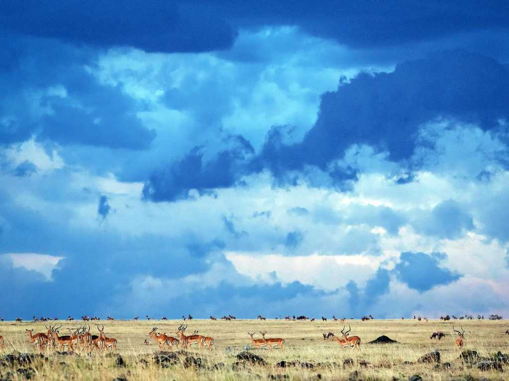 A stormy sky heralds the end of the dry season on an East African savanna in a scene from the grasslands episode of the TV series Planet Earth II