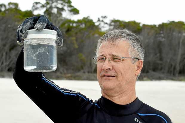 Irukandji Fraser Island Climate Change