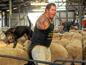 Warwick shearer tackles new challenges