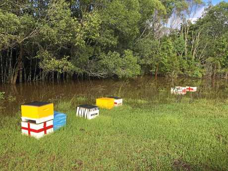 Some of the bees lost at the Bungawalbin property of Natasha Smart-Morrison