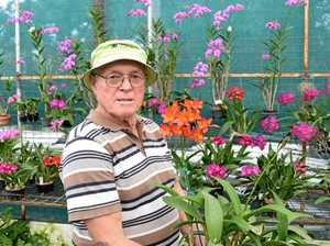 RARE BEAUTY: Dr Desmond Neuendorff with the Rest In Peace orchid he is donating to the Ipswich Orchid Society.
