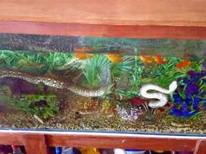 There's a snake in my fish tank!