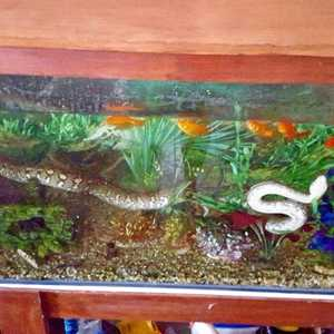 There S A Snake In My Fish Tank News Mail