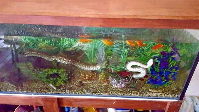 THAT'S NOT A FISH: Leanne Wilkinson got a surprise when she woke up to find a snake in her fish tank.