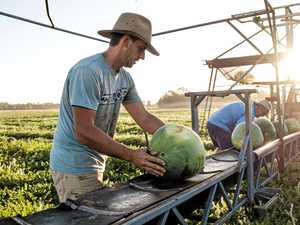 Extreme two years for region's melon farmers