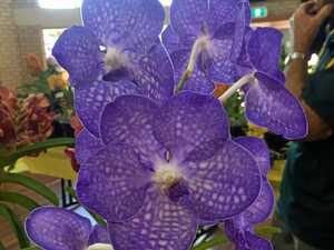 Colourful orchids on display