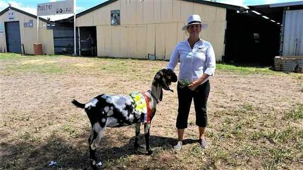 Karen Coghill of Clermont with her goat, Chelsea Park Aroma, awarded supreme exhibit of the show.