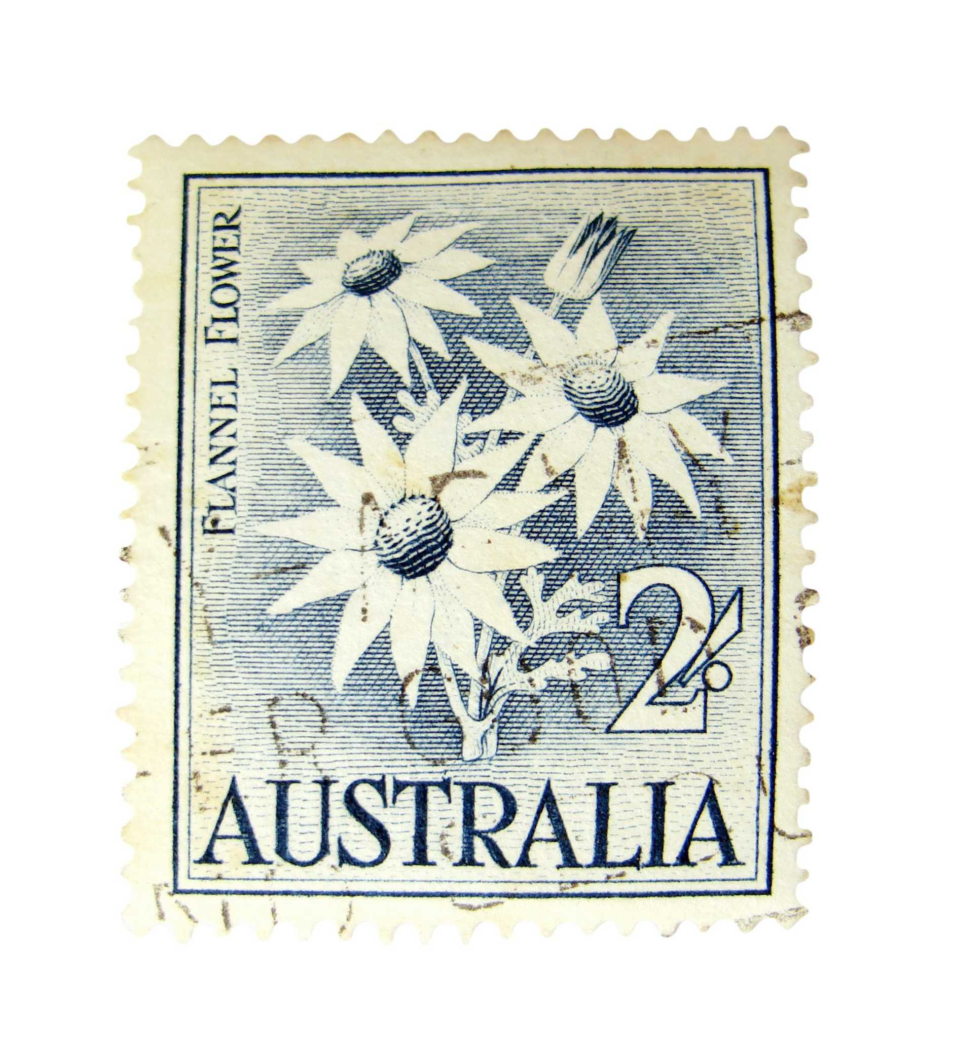 Australia postage stamp with flannel flowers on white background