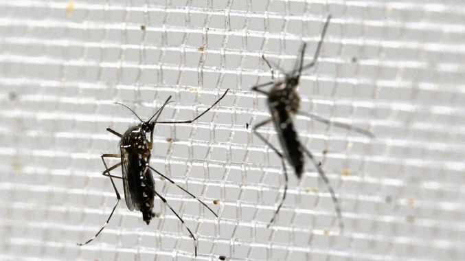 Council will commence inspection programs for mosquitoes in the Fraser Coast area, following heavy rainfall.