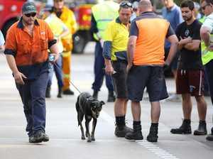 Dog sole survivor as truck drivers killed in fiery crash