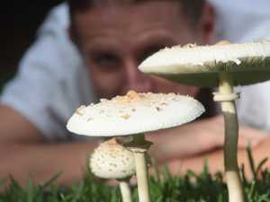 When it rains, it spores: How big are your mushrooms?