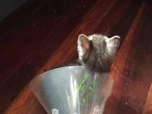 Kittens found after crash detour