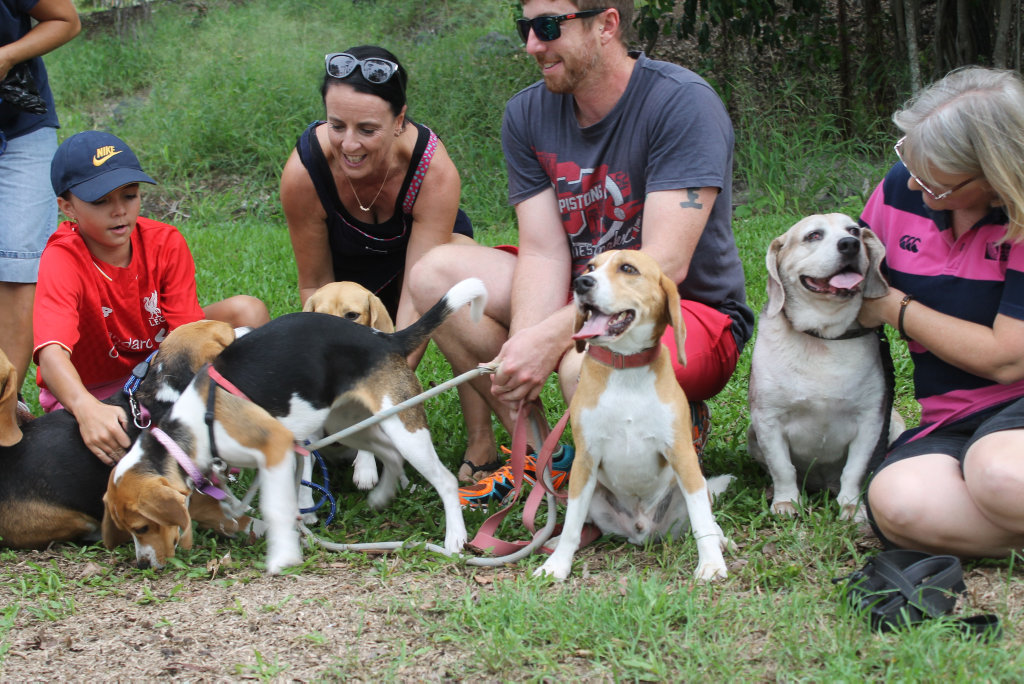 Beagle Club of Queensland's Fraser Coast group will do a beagle walk on April 23, in conjunction with an international event.
