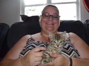 Detour around tragic Gunalda crash leads to kitten rescue