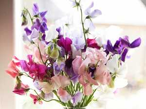 Close up Bouquet of Attractive Fresh Flowers with Stems on Glass Vase with Water on Top of the Table.