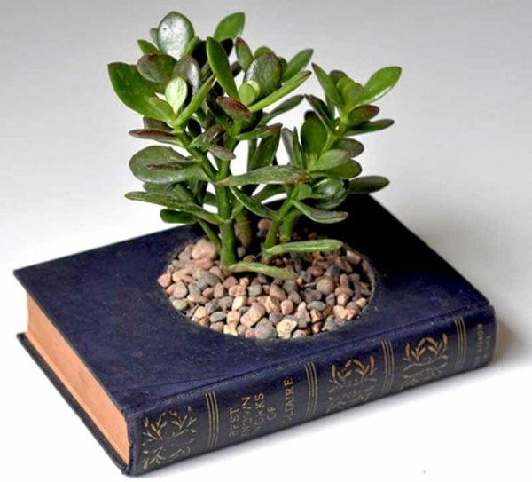 Make use of your old hard-cover books and turn them into an indoor pot for your succulents.