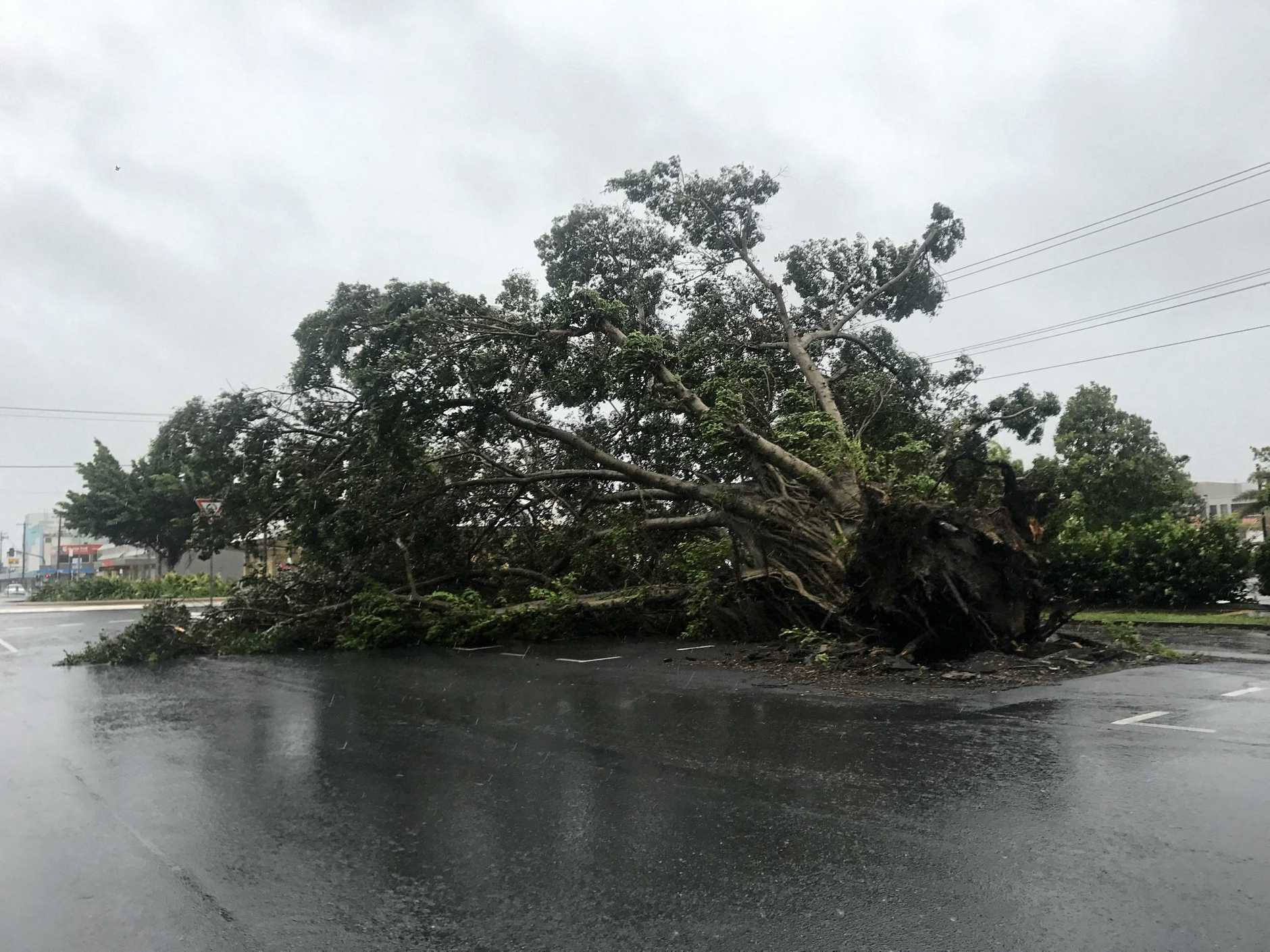 A large fig tree has closed East Gordon St and Brisbane St intersection.
