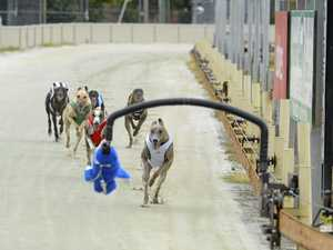 Greyhound reform recommendations to be adopted