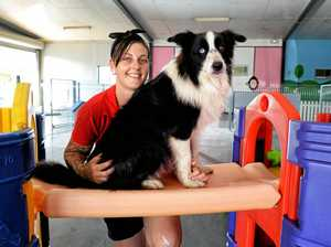New Ipswich business keeping bored dogs busy