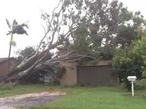 Tree ripped out of ground collapses on house