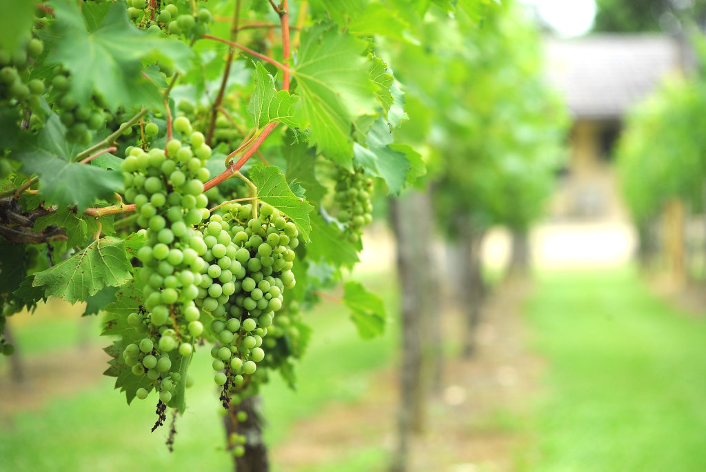 The site on Mount Beppo Rd is already home to a vineyard but the owners have bold plans to demolish an old shed and build a winery in its place.