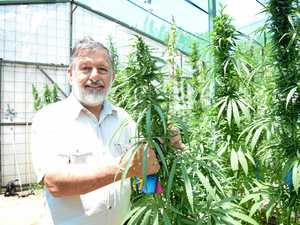 Push for Bundy to become medical cannabis supplier