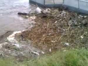 Pioneer River debris