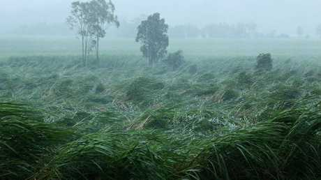 A sugar cane crop at Proserpine bears the brunt of Cyclone Debbie. Picture: Liam Kidston.