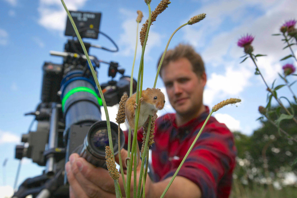 Cameraman Jonathan Jones focuses his lens on a harvest mouse climbing grass stems in a wild meadow in Norfolk for Planet Earth II.