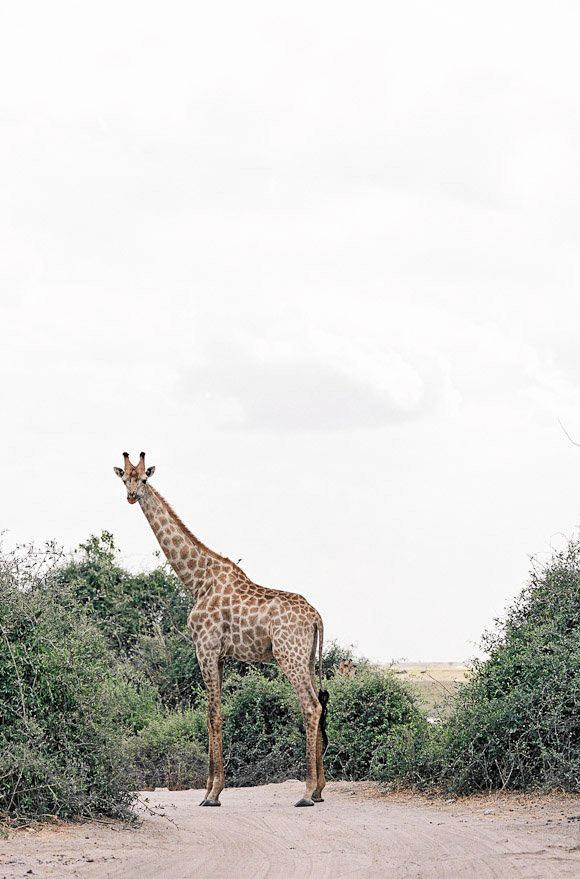 MARRIED ON SAFARI: The couple were treated to some amazing sights on their trip.