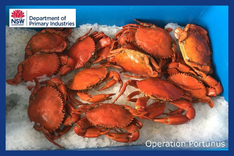 Recreational fishers were found to be selling mud crabs to a commercial outlet in Yamba.
