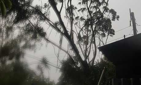 A tree rests against powerlines after a storm ripped through the Noosa hinterland.
